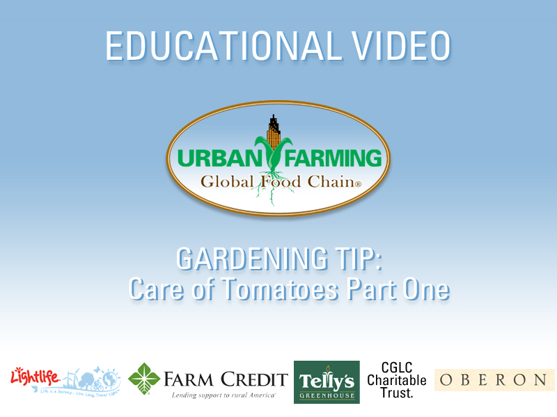 Educational Video- Care of Tomatoes: Part One